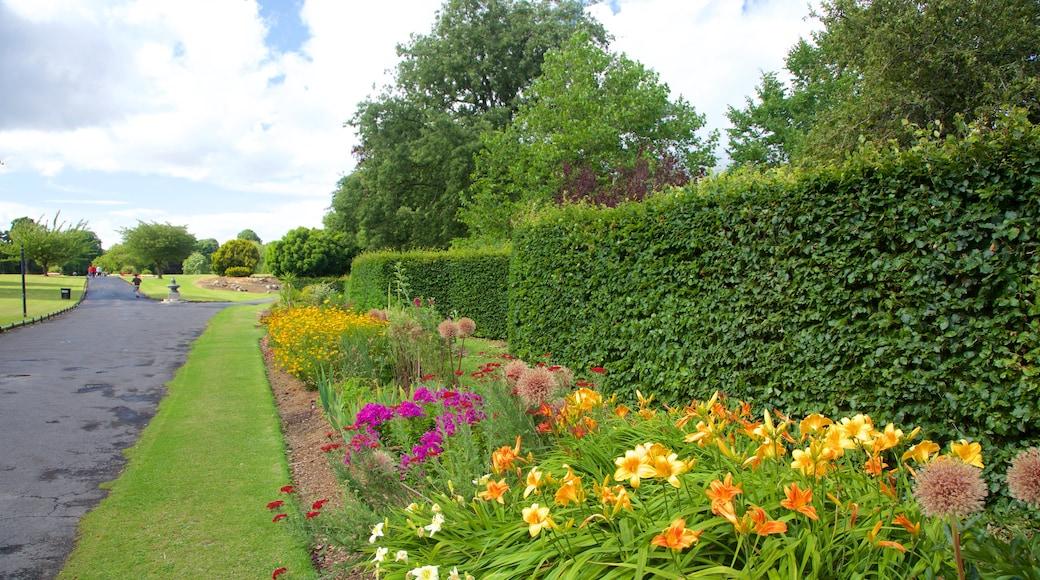 Phoenix Park featuring a garden and flowers