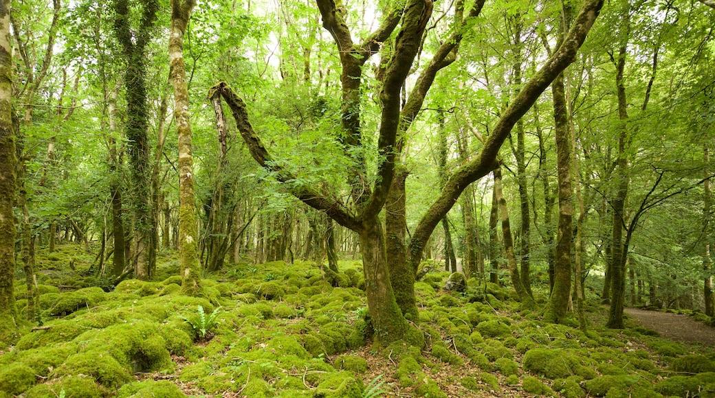 Craggaunowen which includes forests