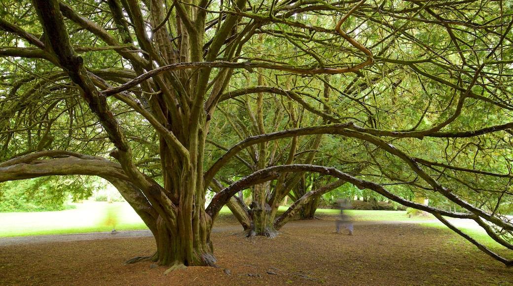 Cong Abbey welches beinhaltet Park