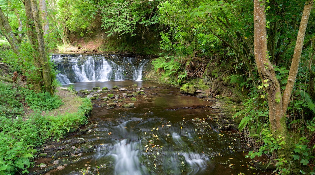 Glencar Waterfall showing tranquil scenes, forests and a river or creek
