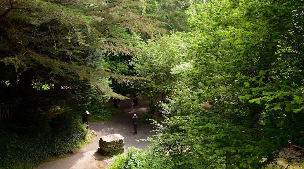 Tobernalt Holy Well which includes a park, heritage elements and religious aspects