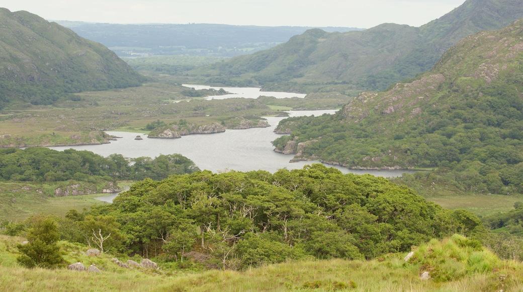 Ladies View welches beinhaltet ruhige Szenerie, Landschaften und See oder Wasserstelle