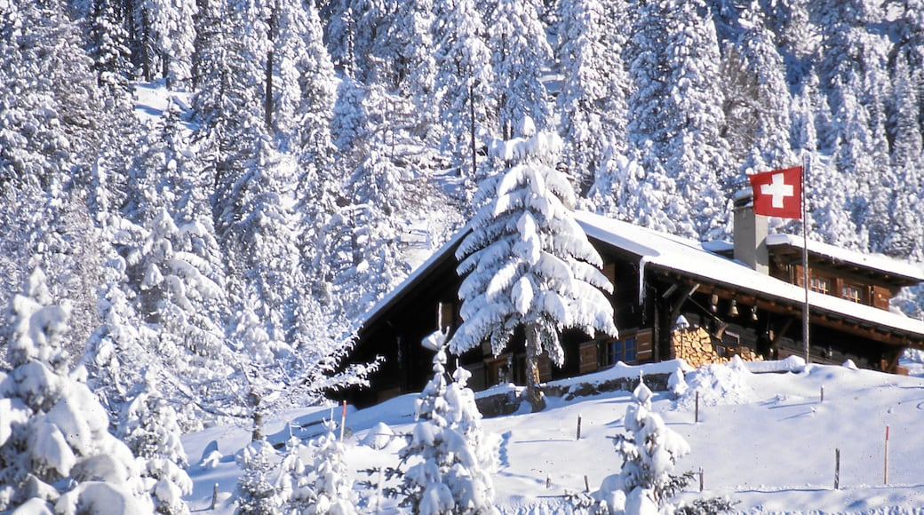 Villars which includes a house, forest scenes and snow