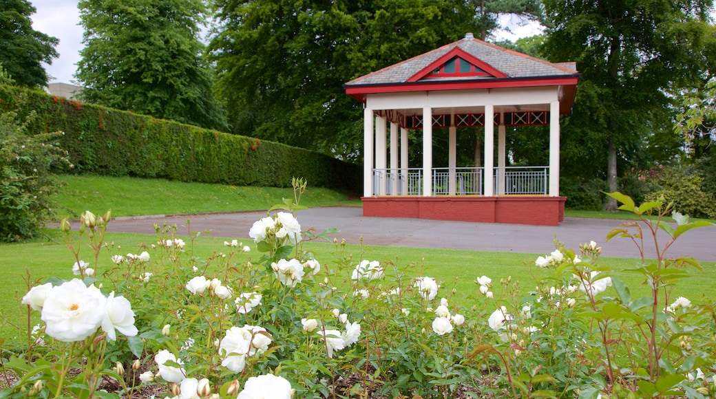 Belfast Botanic Gardens which includes flowers, heritage elements and a garden
