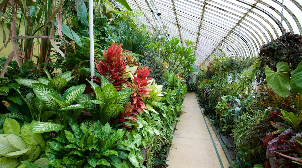 Belfast Botanic Gardens which includes a park, interior views and flowers