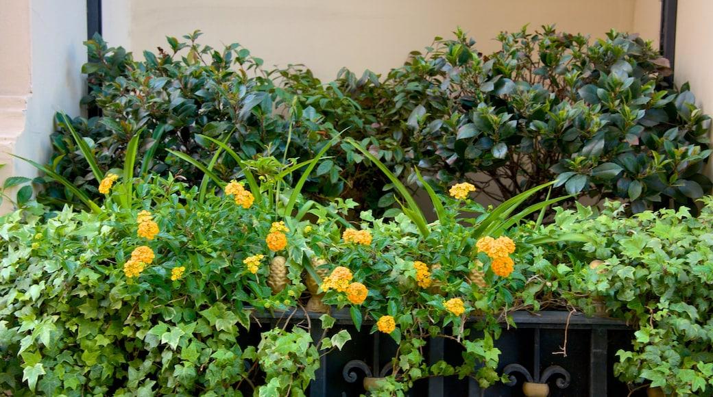 Via Veneto caratteristiche di fiori