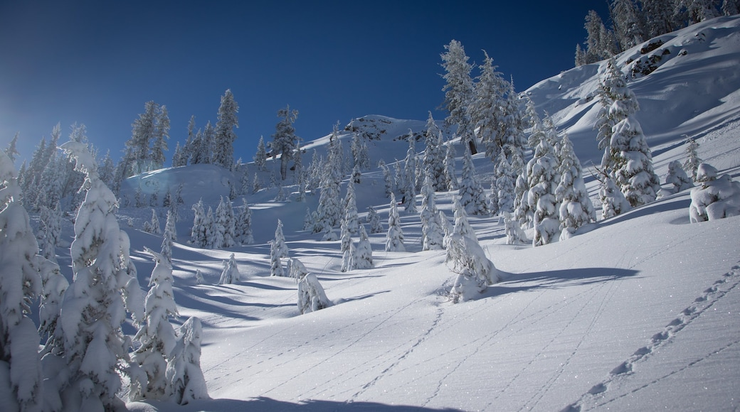 Alpine Meadows Ski Resort showing mountains, tranquil scenes and snow