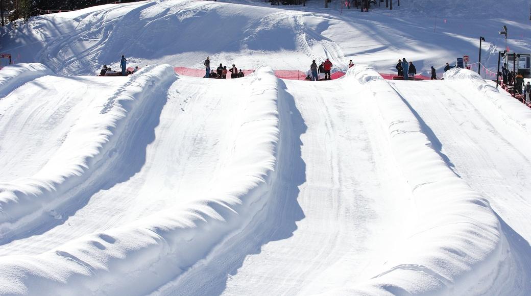 Estación de esquí Copper Mountain que incluye tubing en la nieve y nieve