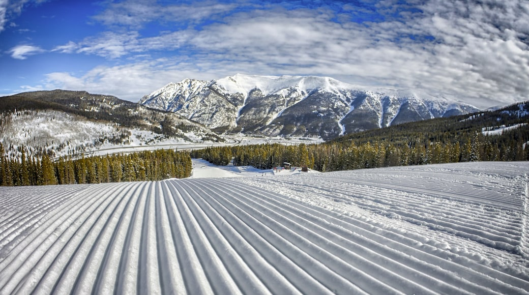Estación de esquí Copper Mountain que incluye imágenes de bosques, nieve y montañas