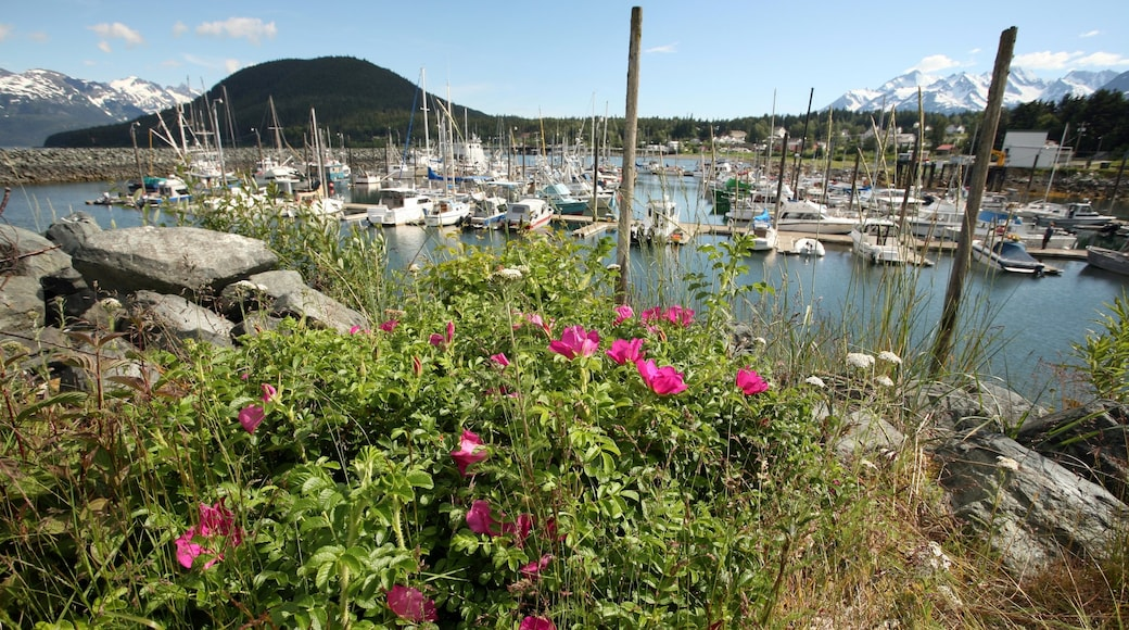 Haines featuring a bay or harbour, wild flowers and a lake or waterhole