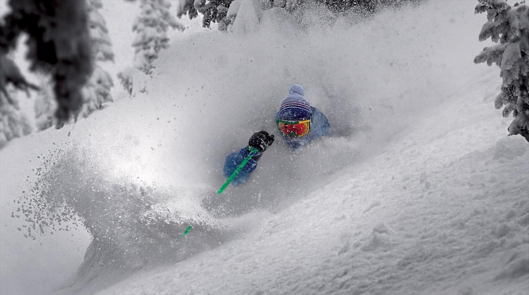 Grand Targhee Resort featuring hiihto ja lunta sekä yksi mies