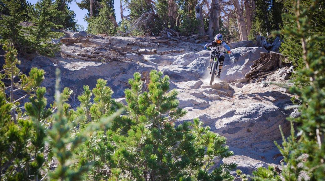 Mammoth Mountain Ski Resort que inclui cenas tranquilas e mountain bike assim como um homem sozinho
