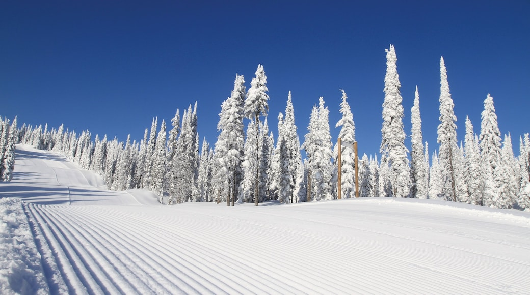 Silver Star Ski Resort which includes forest scenes and snow