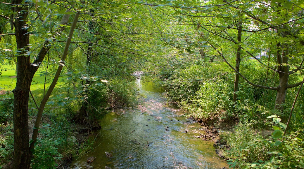 Brampton showing a garden and a river or creek