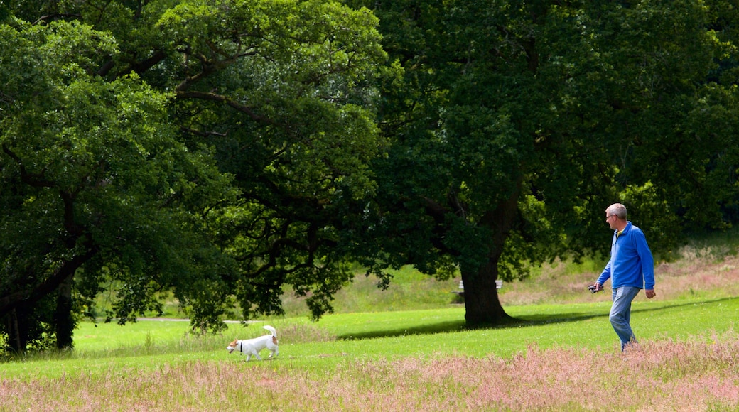 Singleton Park featuring hiking or walking and a park as well as an individual male