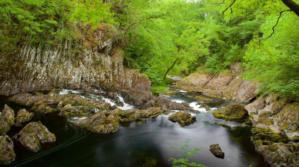 Swallow Falls das einen Fluss oder Bach und Wälder