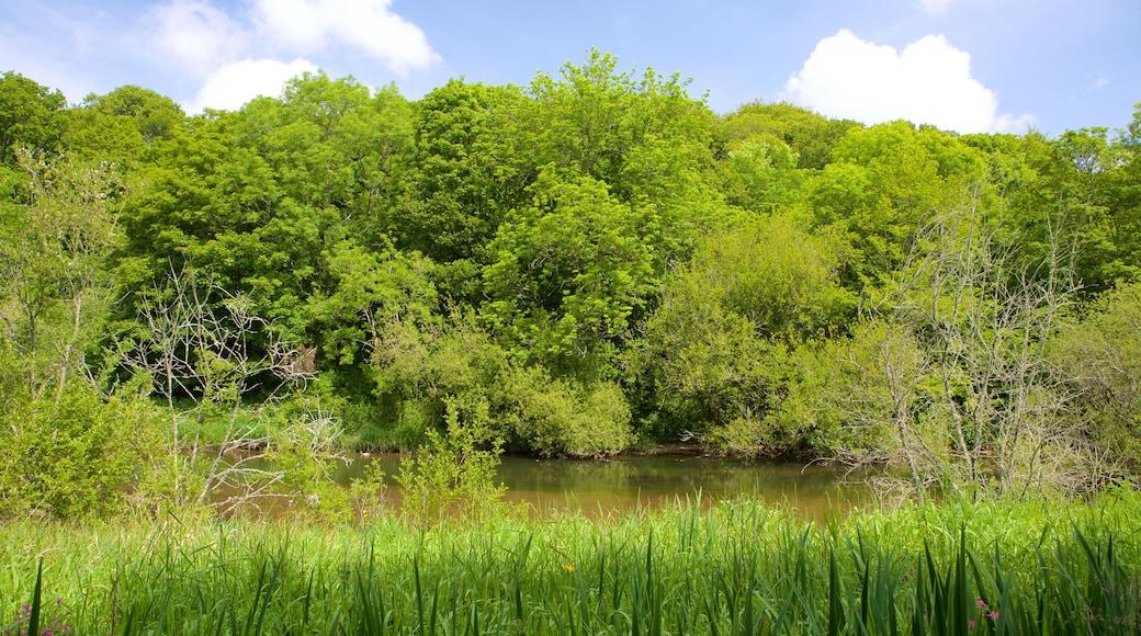 Llangefni welches beinhaltet Wälder und Fluss oder Bach