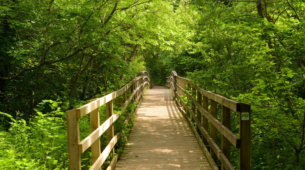 Llangefni welches beinhaltet Wälder und Brücke