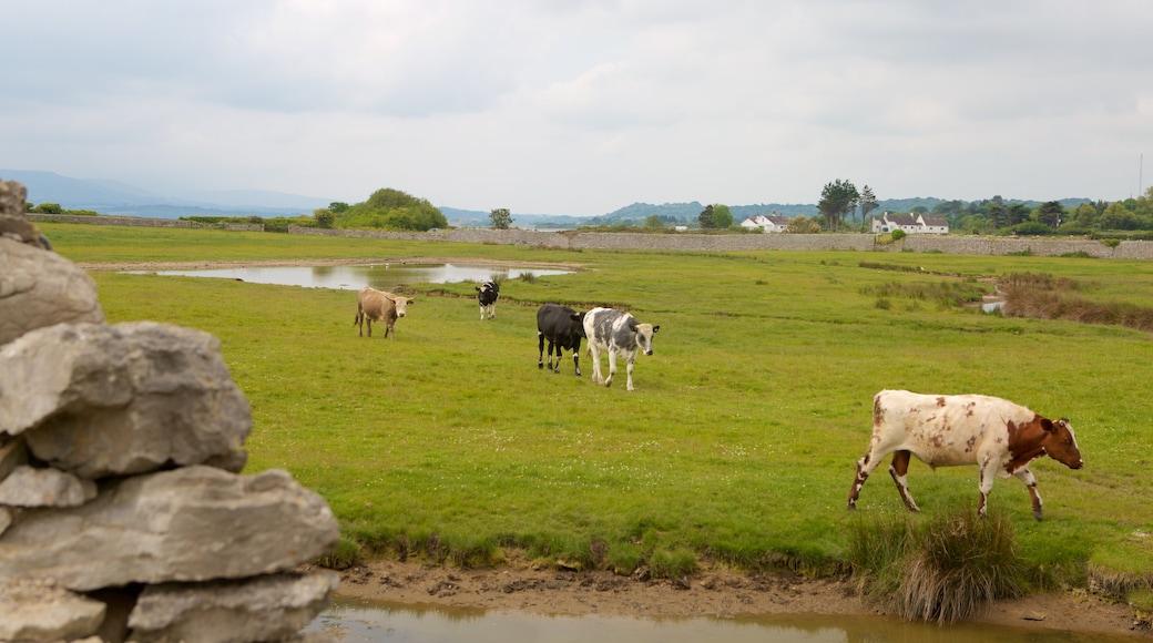 Isle of Anglesey mit einem Farmland und Landtiere