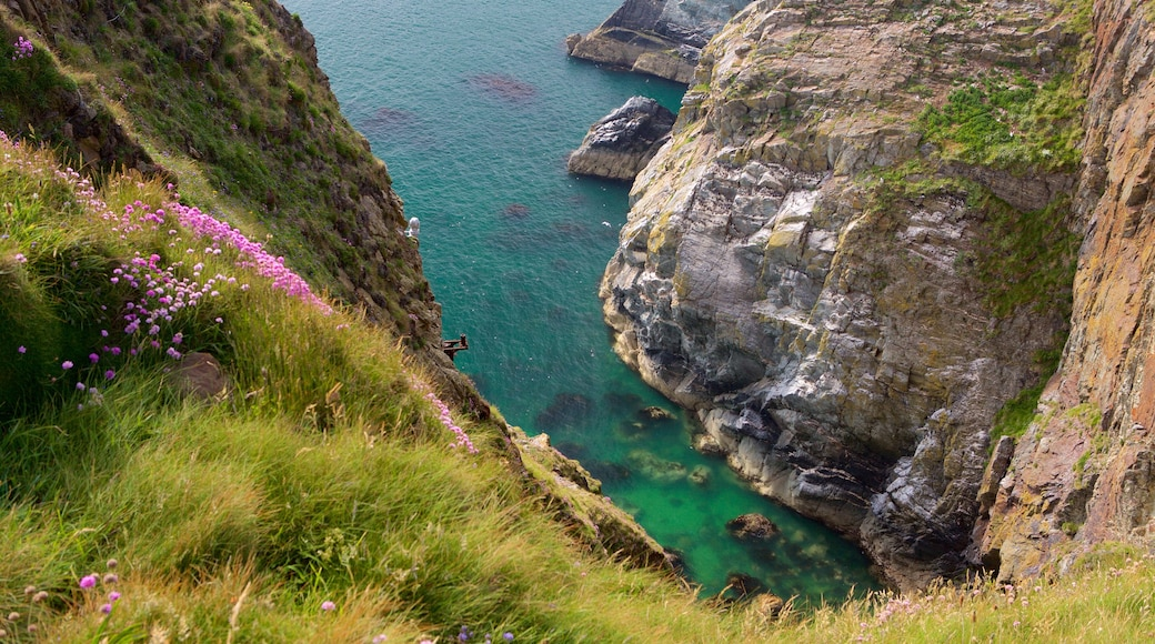 Ile d\'Anglesey mettant en vedette côte rocheuse et gorge ou canyon