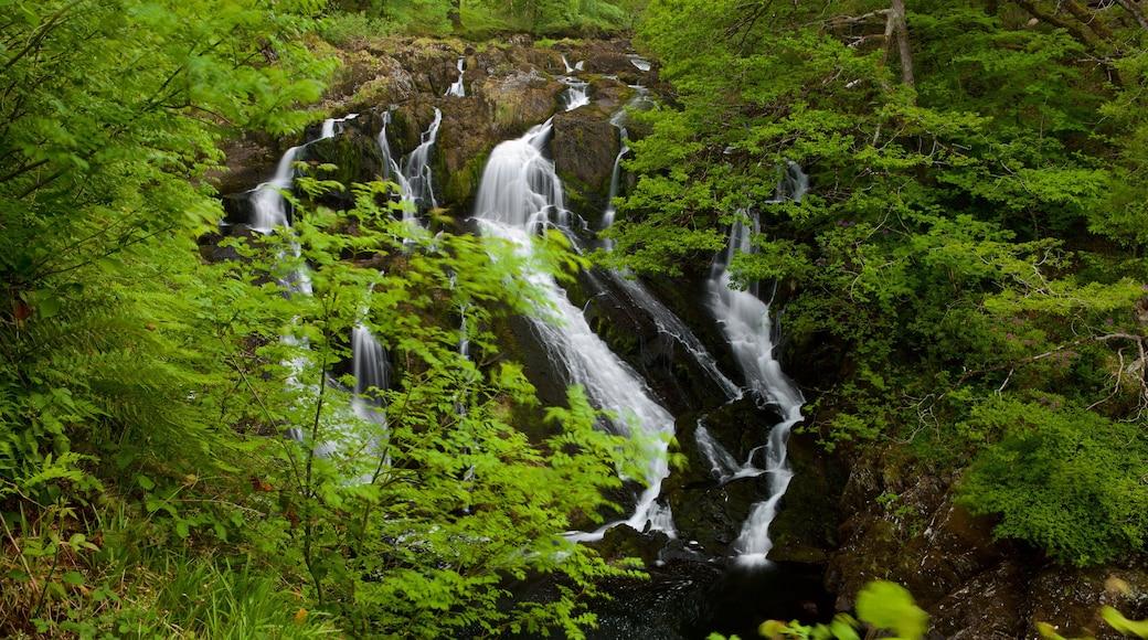 Swallow Falls das einen Wasserfall und Regenwald