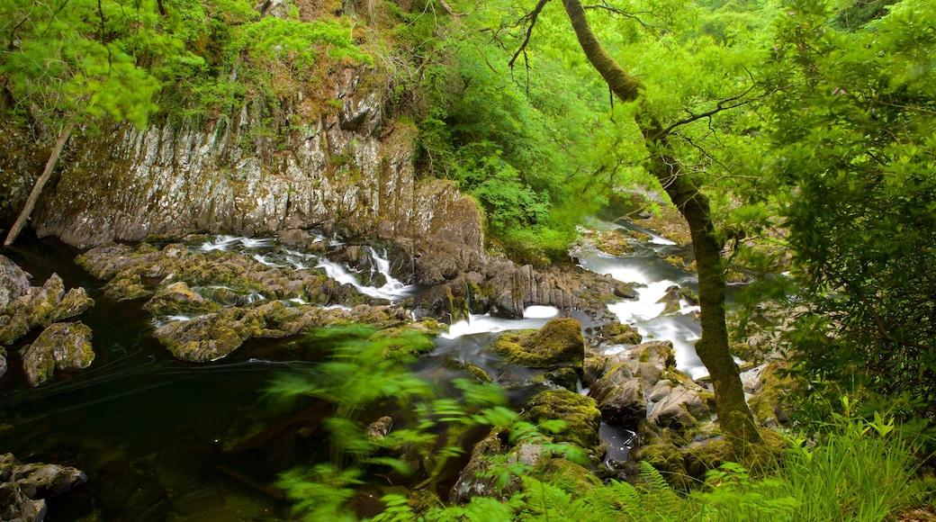 Swallow Falls mit einem Stromschnellen, Fluss oder Bach und Regenwald