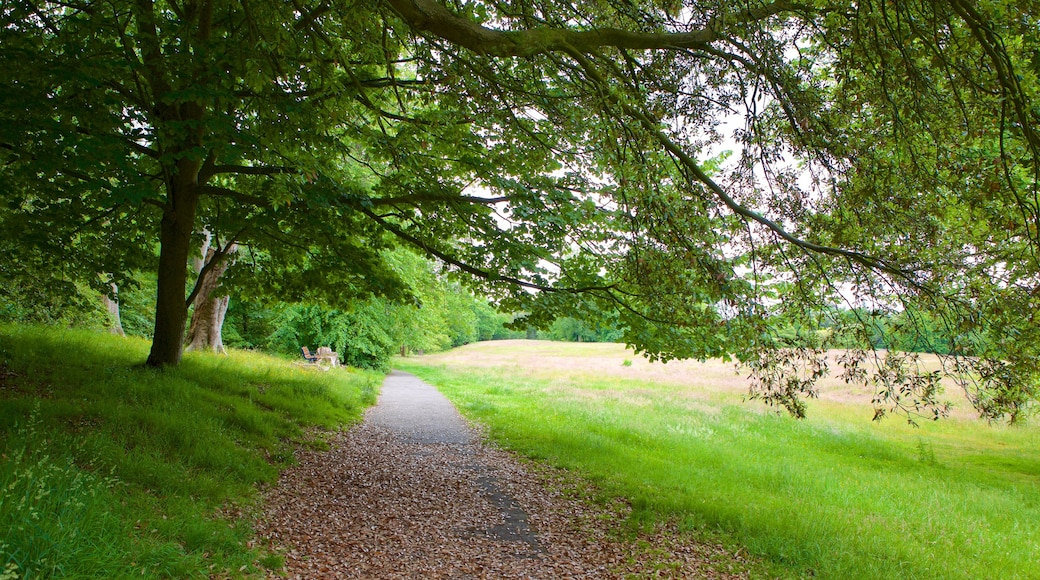 Singleton Park featuring a garden