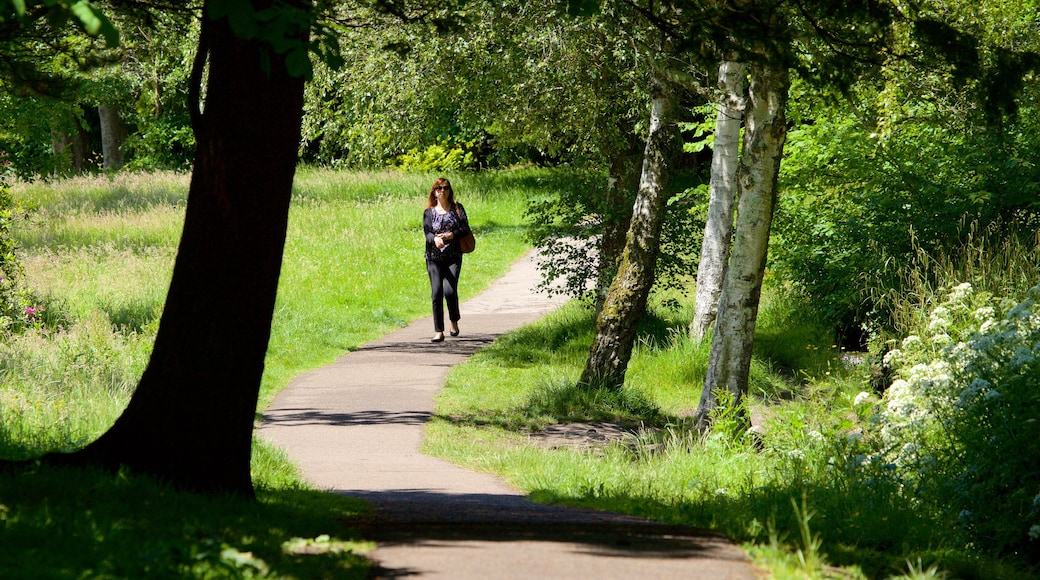 Singleton Park which includes a park and hiking or walking as well as an individual female
