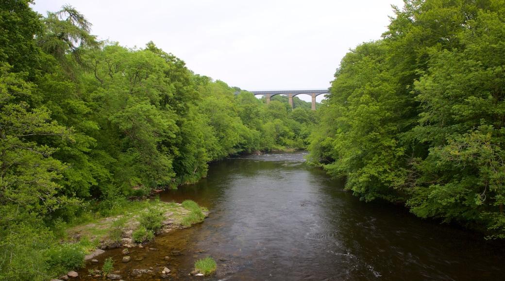 Pontcysyllte Aqueduct welches beinhaltet Waldmotive und Fluss oder Bach