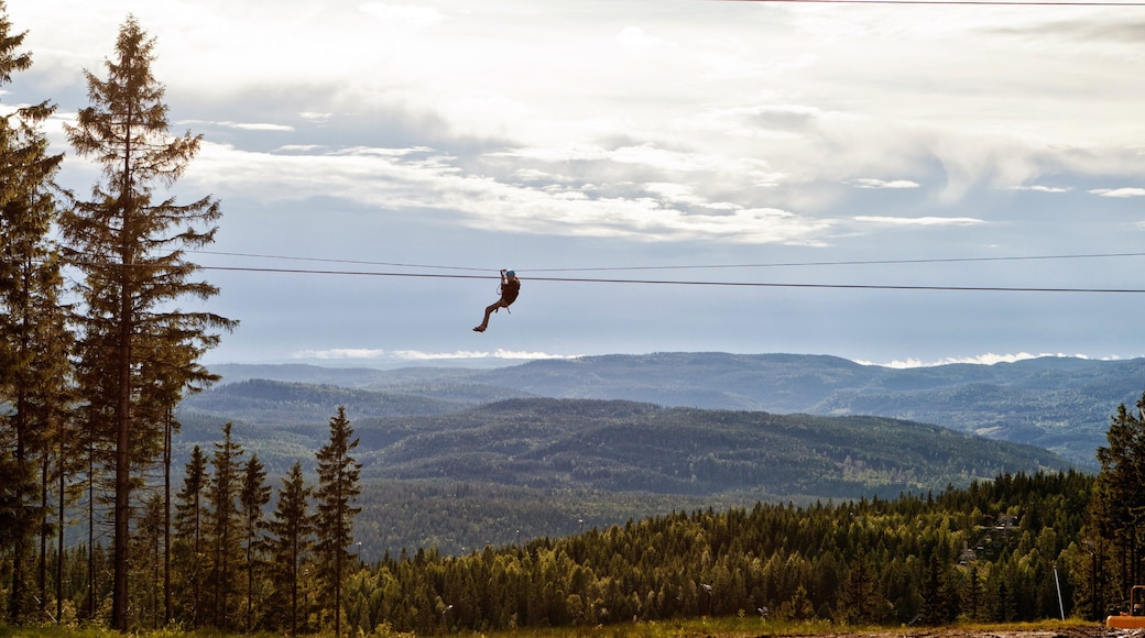 Oslo Winter Park which includes forests and zip lining as well as an individual male