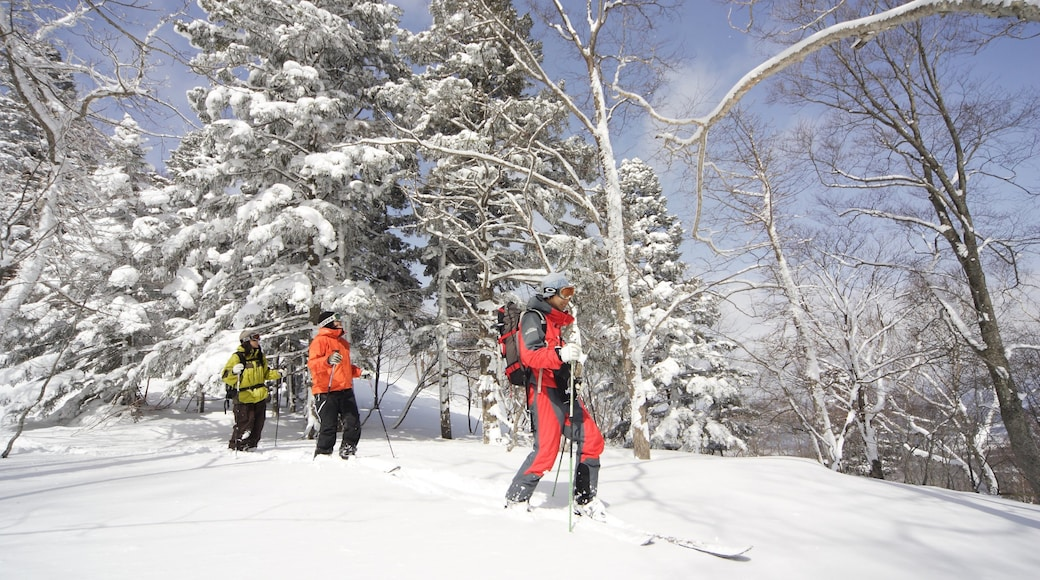 Appi Kogen Ski Resort which includes snow skiing, forests and snow
