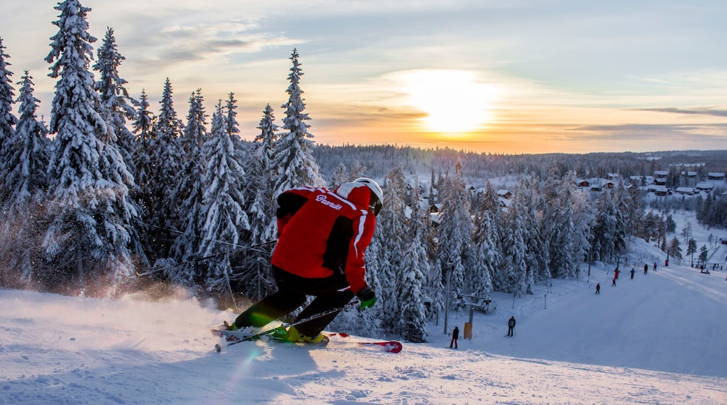Branas Ski Resort showing snow, snow skiing and forests