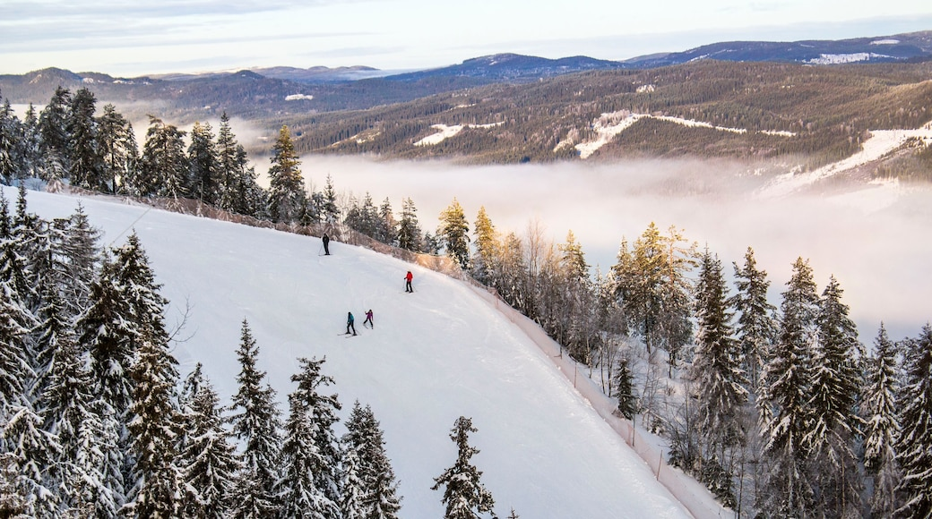 Branas Ski Resort featuring forests, mist or fog and snow