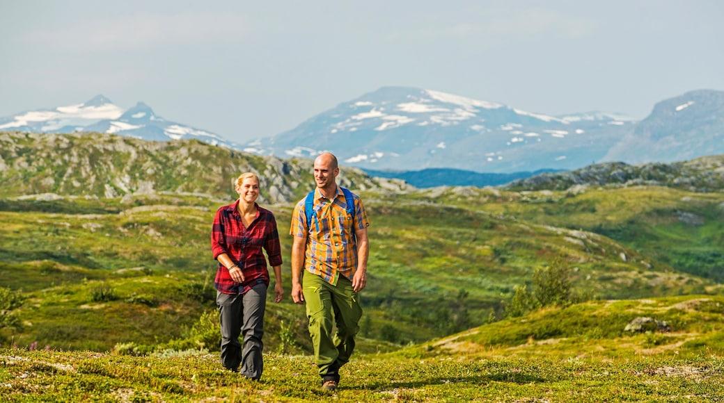Björkliden Fjällby som visar vandring och stillsam natur såväl som en liten grupp av människor