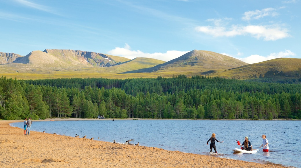 Loch Morlich showing forest scenes, a lake or waterhole and water sports