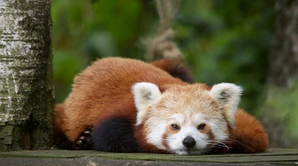 Highland Wildlife Park showing cuddly or friendly animals