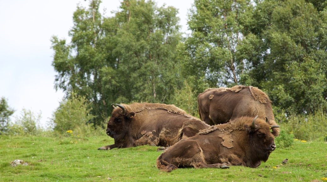 Highland Wildlife Park featuring land animals and forest scenes