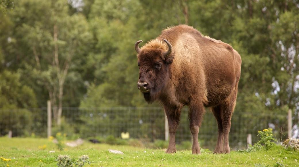 Highland Wildlife Park which includes land animals