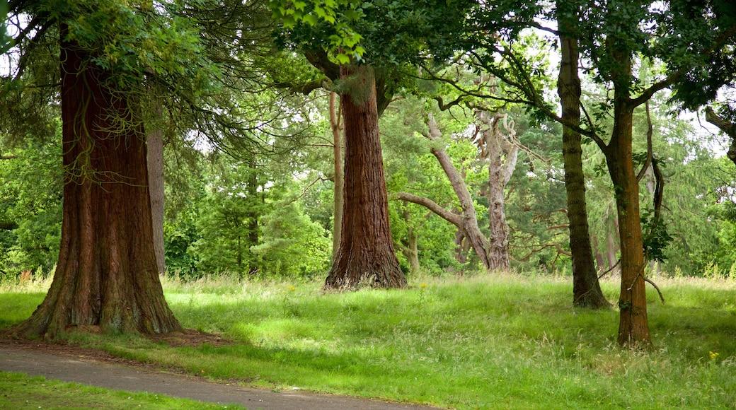 Callendar House mettant en vedette scènes forestières