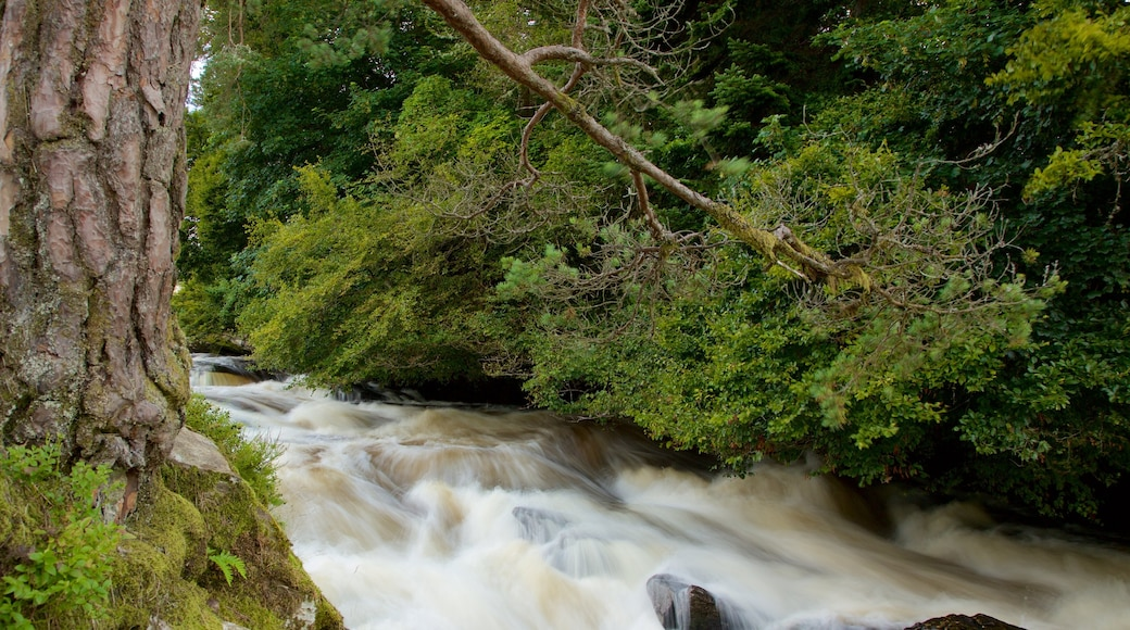 Falls of Dochart showing rapids and forests
