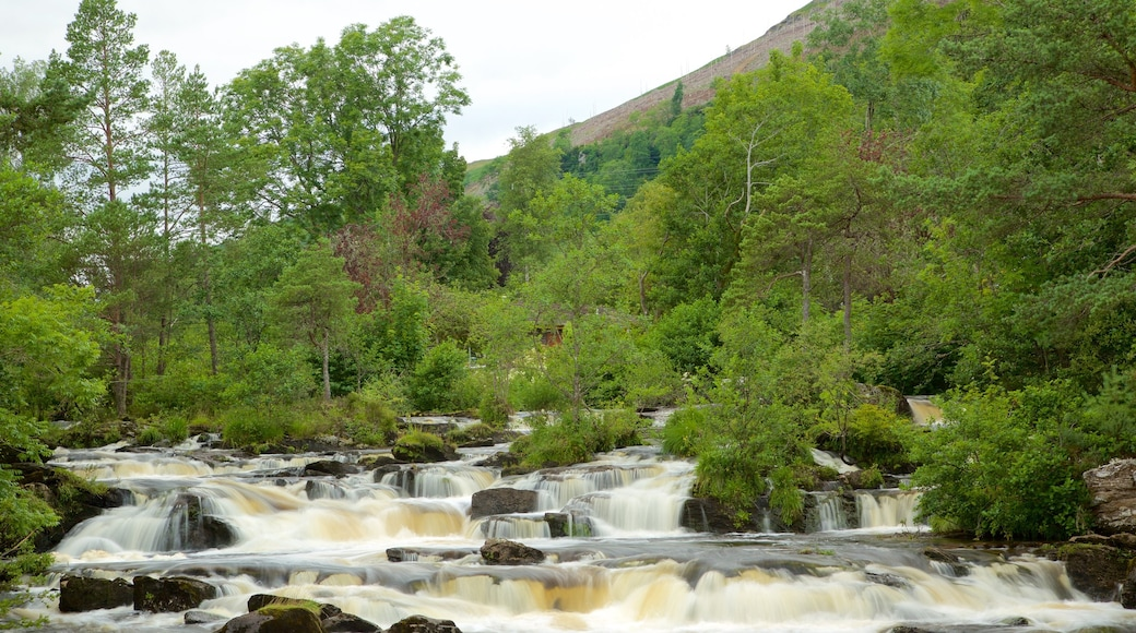 Falls of Dochart featuring forest scenes and rapids