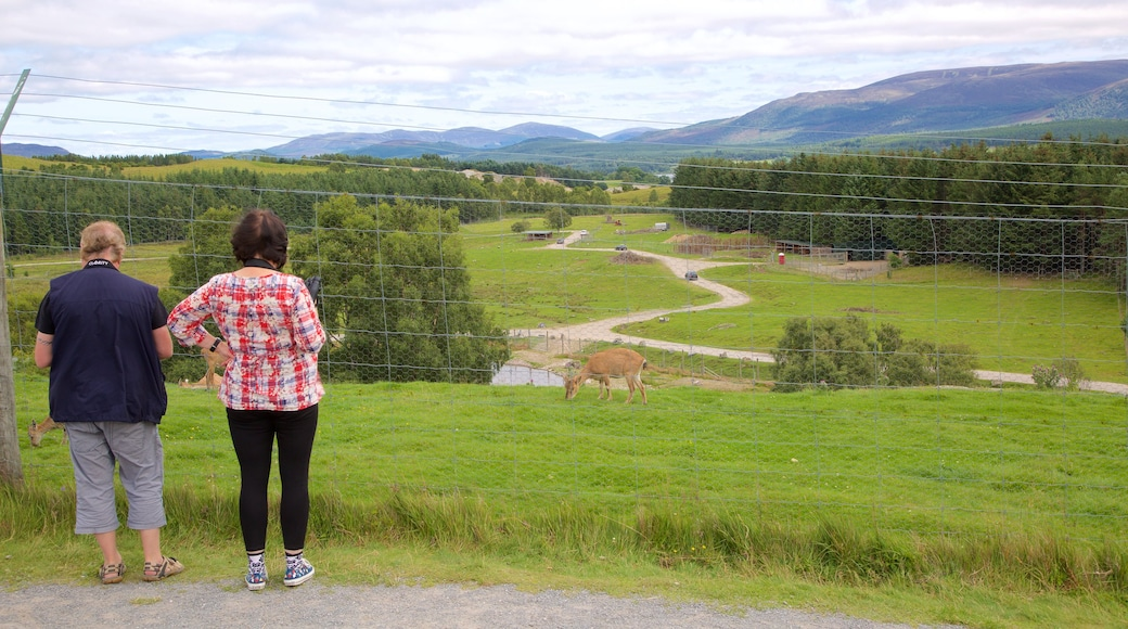 Highland Wildlife Park which includes animals, cuddly or friendly animals and zoo animals