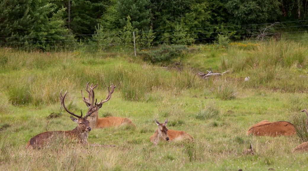 Highland Wildlife Park featuring zoo animals and land animals