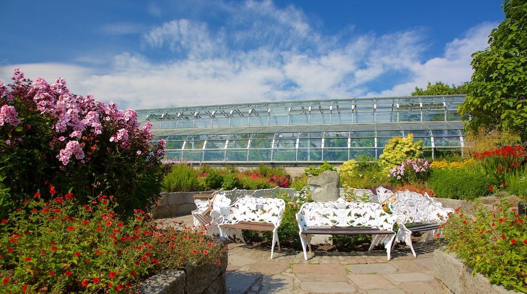 Duthie Park Winter Gardens which includes a garden