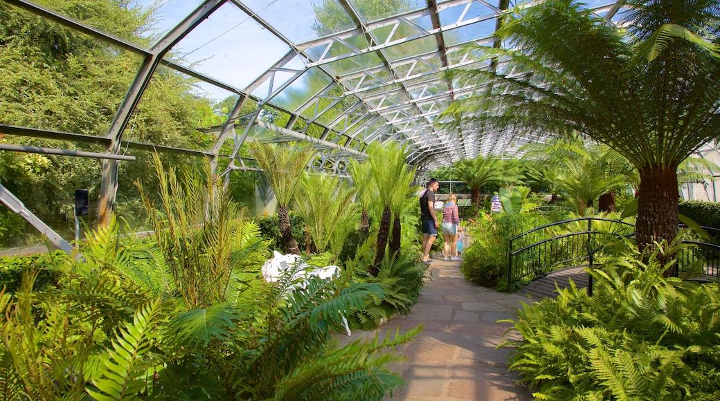 Duthie Park Winter Gardens which includes a garden and interior views