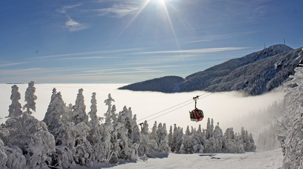 Stowe Mountain Resort showing a gondola, forest scenes and snow