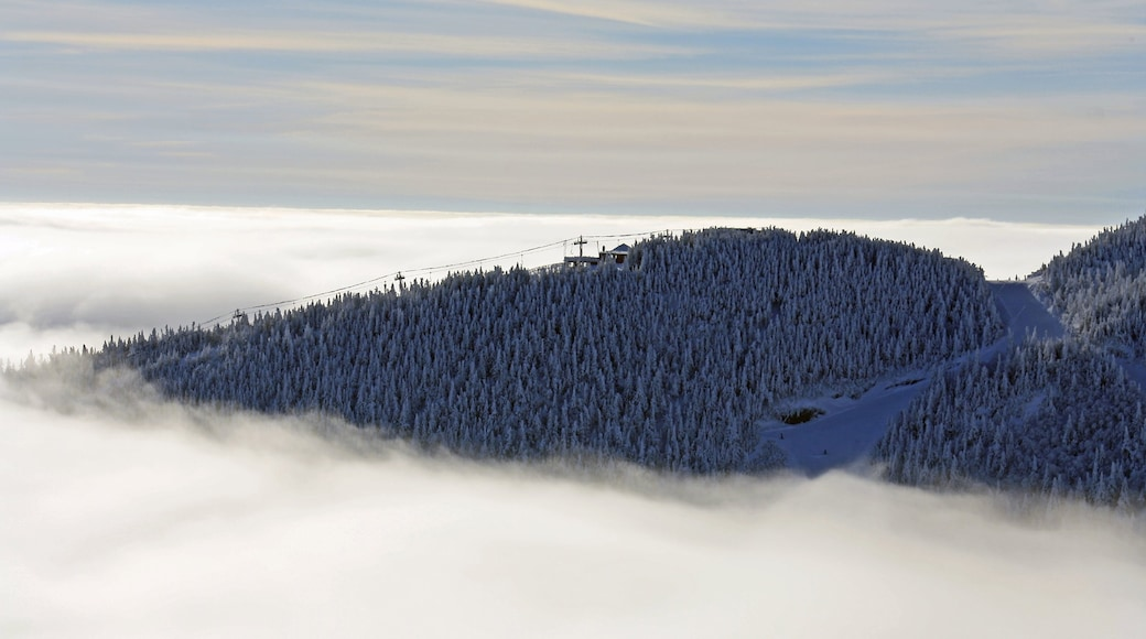 Stowe Mountain Resort featuring mist or fog, snow and forests