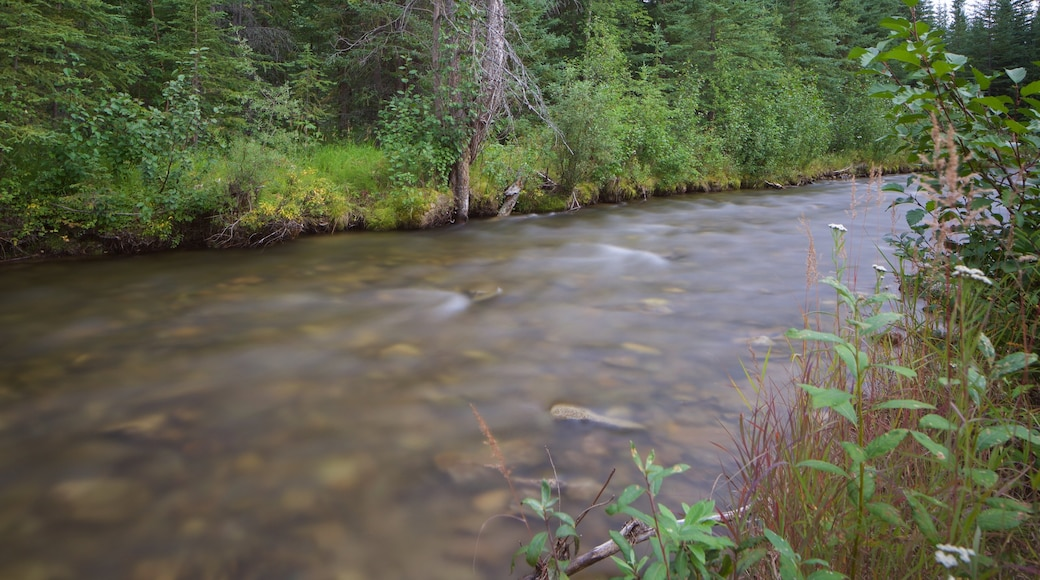 Chena Hot Springs showing a river or creek