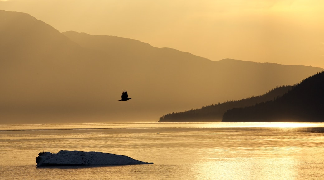 Southeast Alaska - Inside Passage showing mist or fog, a sunset and bird life