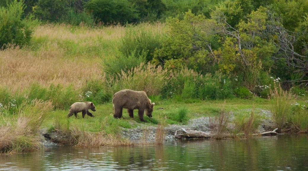 King Salmon montrant animaux dangereux et rivière ou ruisseau